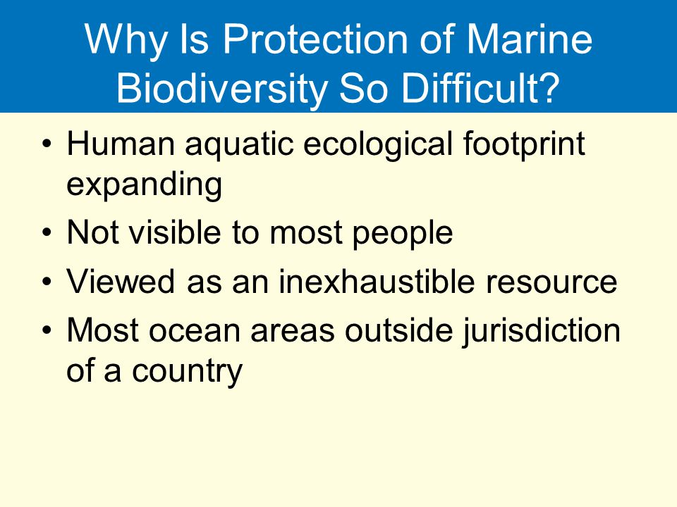 Why Is Protection of Marine Biodiversity So Difficult
