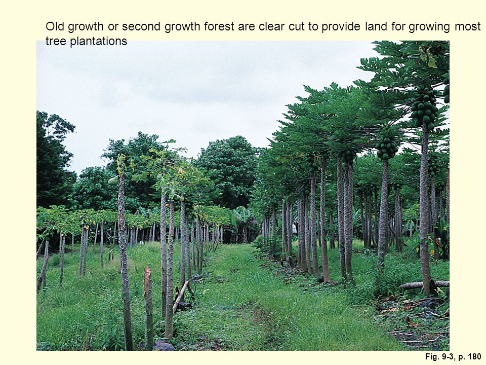 Old growth or second growth forest are clear cut to provide land for growing most