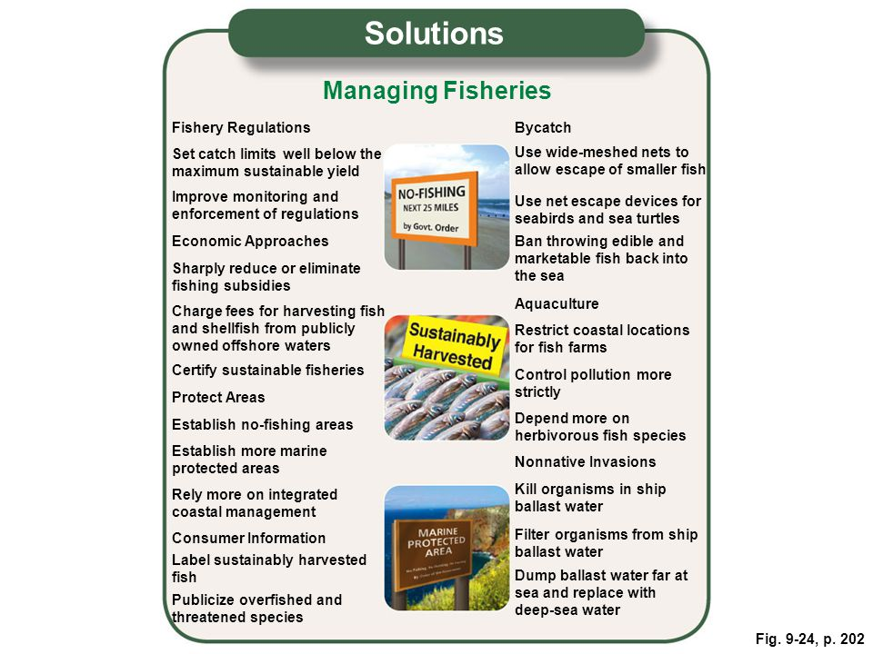Solutions Managing Fisheries