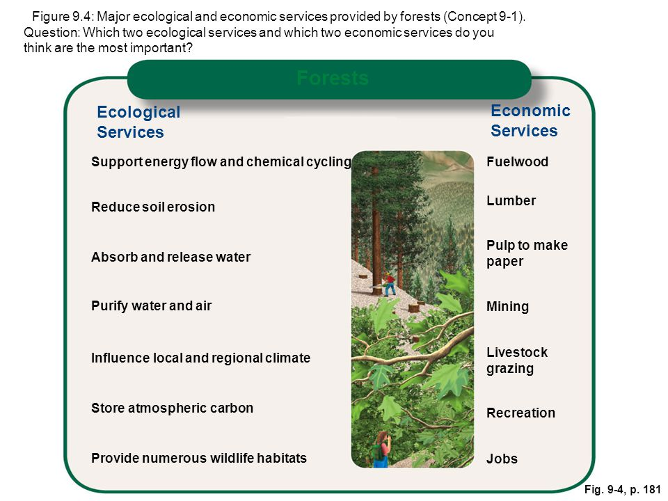 ital Forests Ecological Economic Services Services