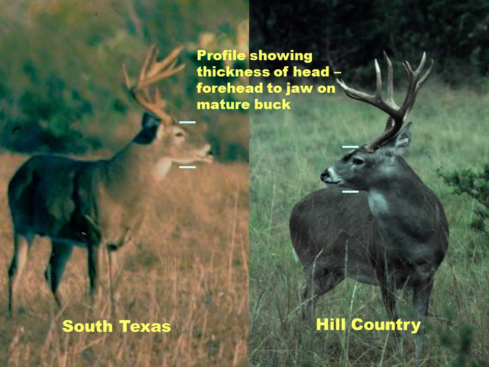 Hill Country South Texas