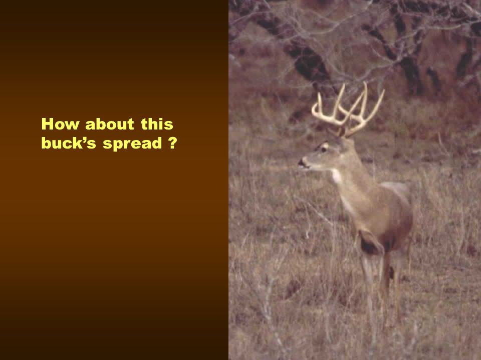 How about this buck's spread
