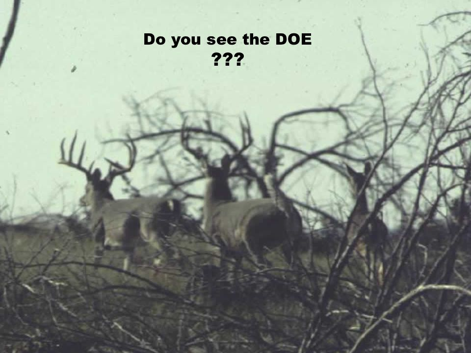 Do you see the DOE