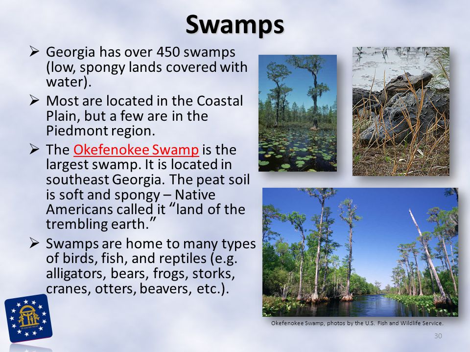 Swamps Georgia has over 450 swamps (low, spongy lands covered with water).