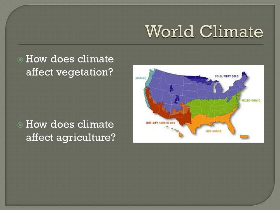 World Climate How does climate affect vegetation