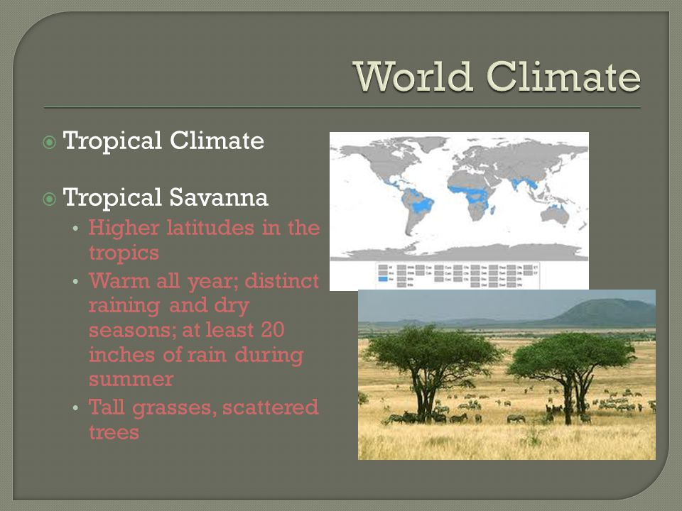 World Climate Tropical Climate Tropical Savanna