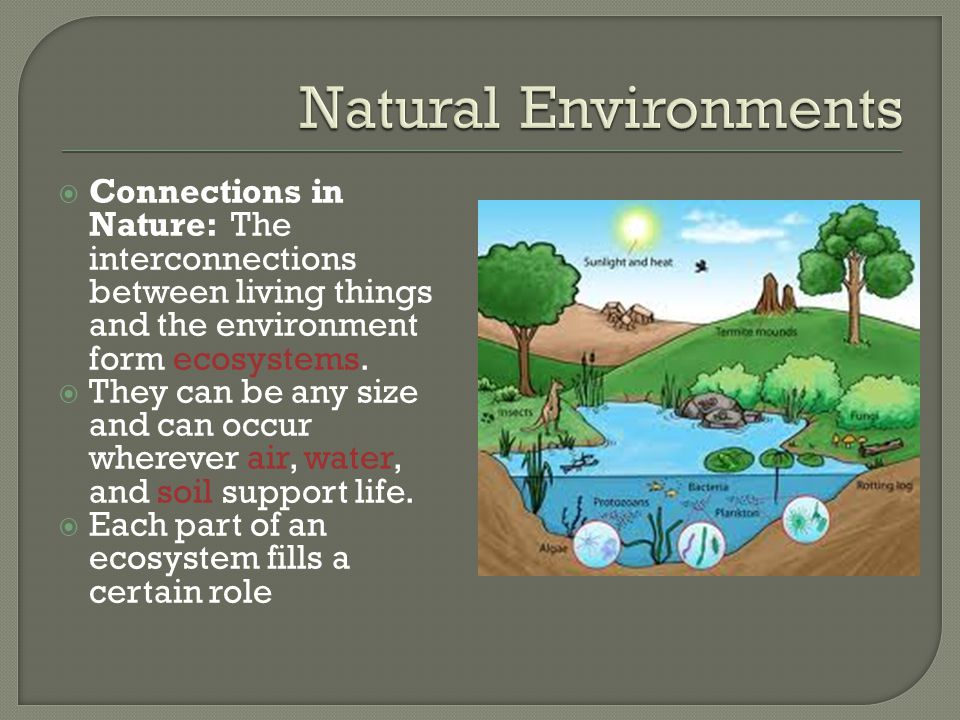 Natural Environments Connections in Nature: The interconnections between living things and the environment form ecosystems.