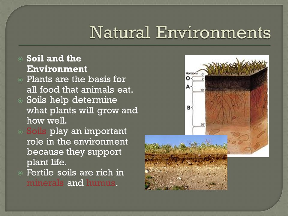 Natural Environments Soil and the Environment