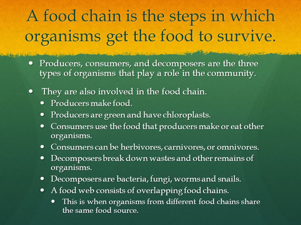 A food chain is the steps in which organisms get the food to survive.