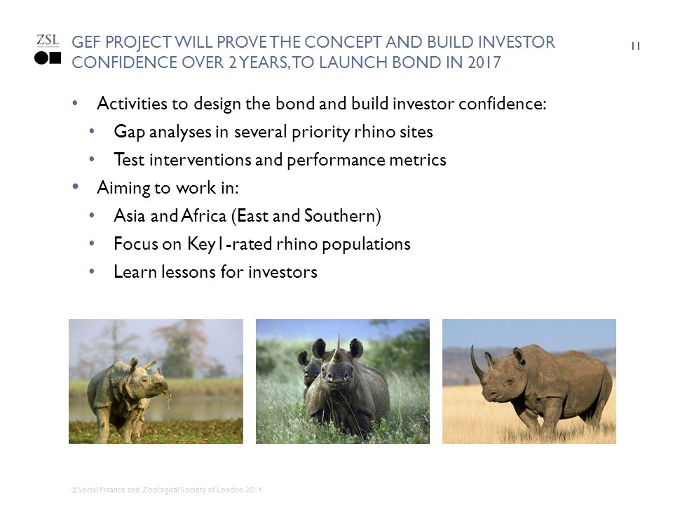 Activities to design the bond and build investor confidence: