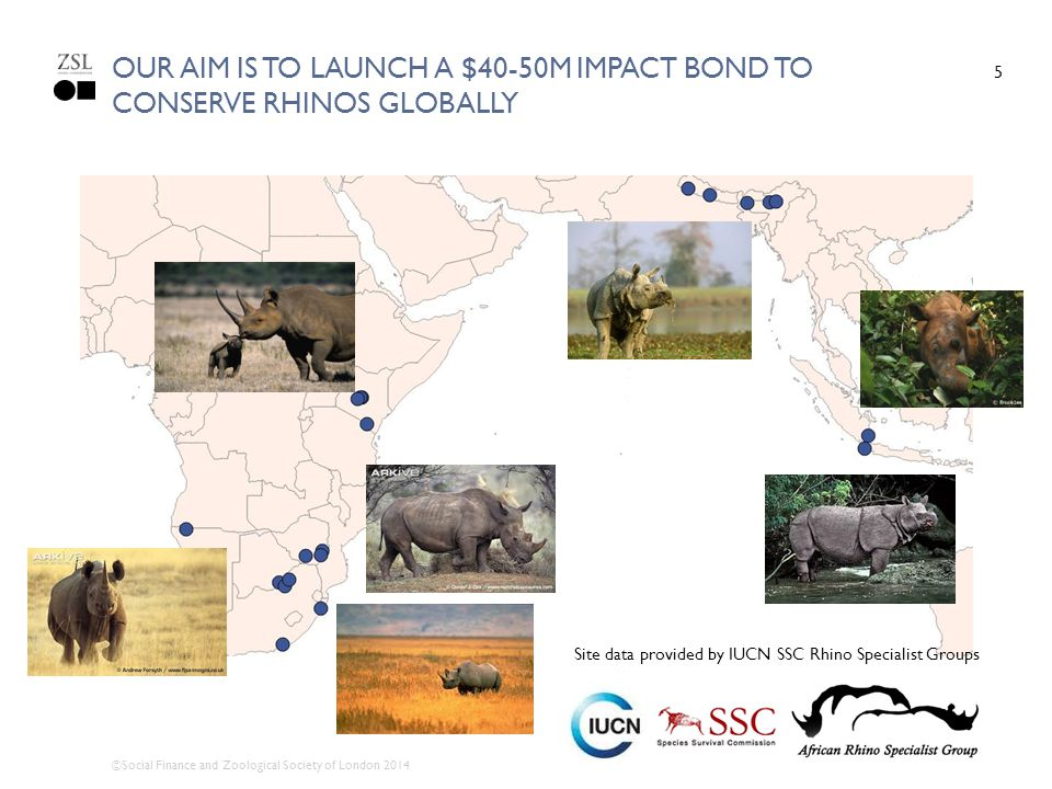 Our Aim is to launch a $40-50m impact bond to conserve rhinos globally
