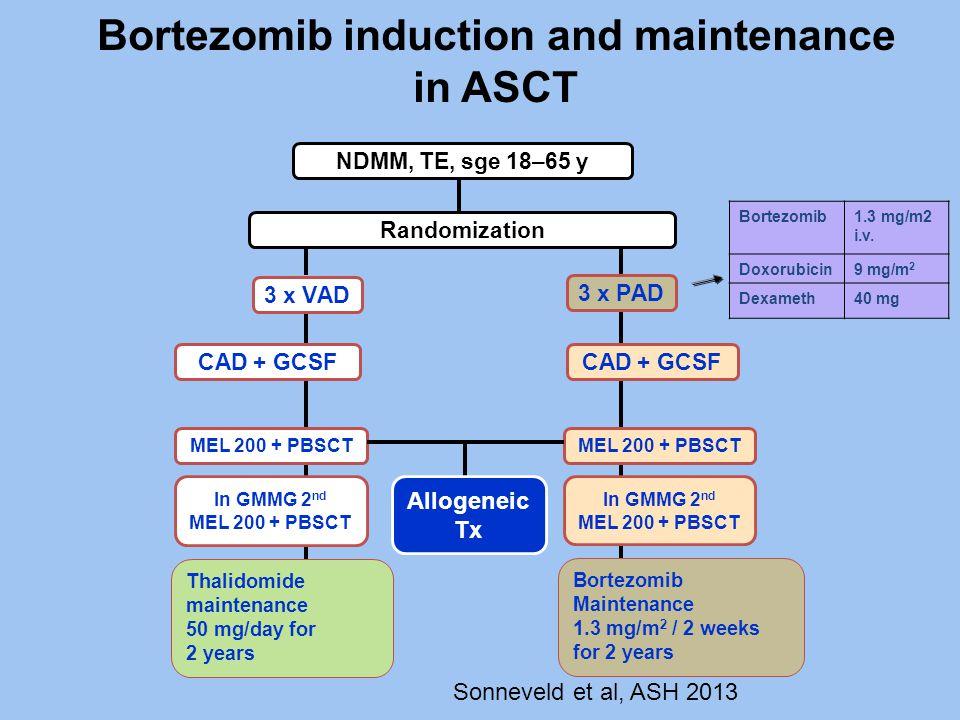 Bortezomib induction and maintenance in ASCT