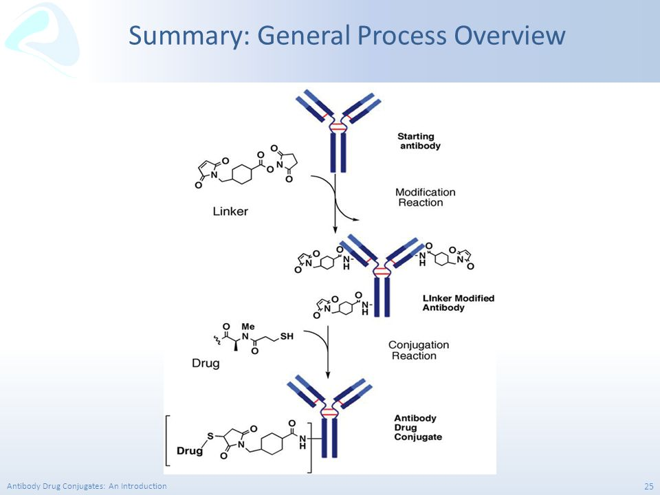 Summary: General Process Overview