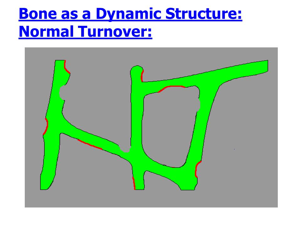 Bone as a Dynamic Structure: Normal Turnover: