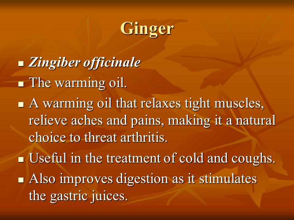 Ginger Zingiber officinale The warming oil.