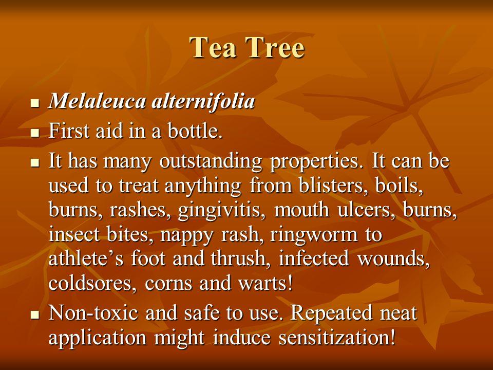 Tea Tree Melaleuca alternifolia First aid in a bottle.