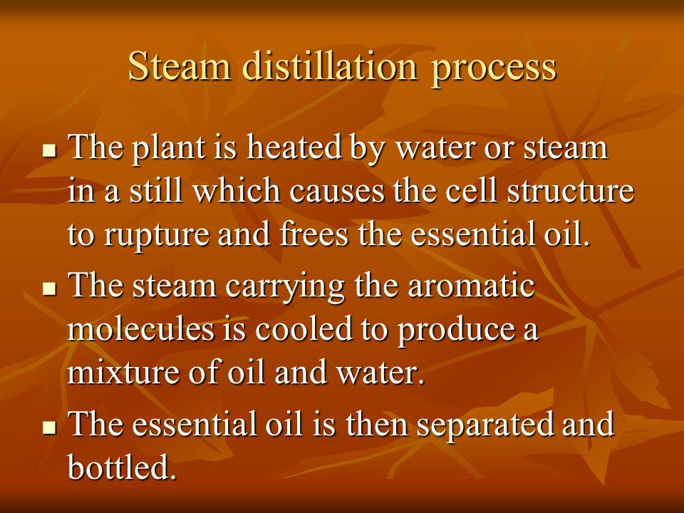 Steam distillation process