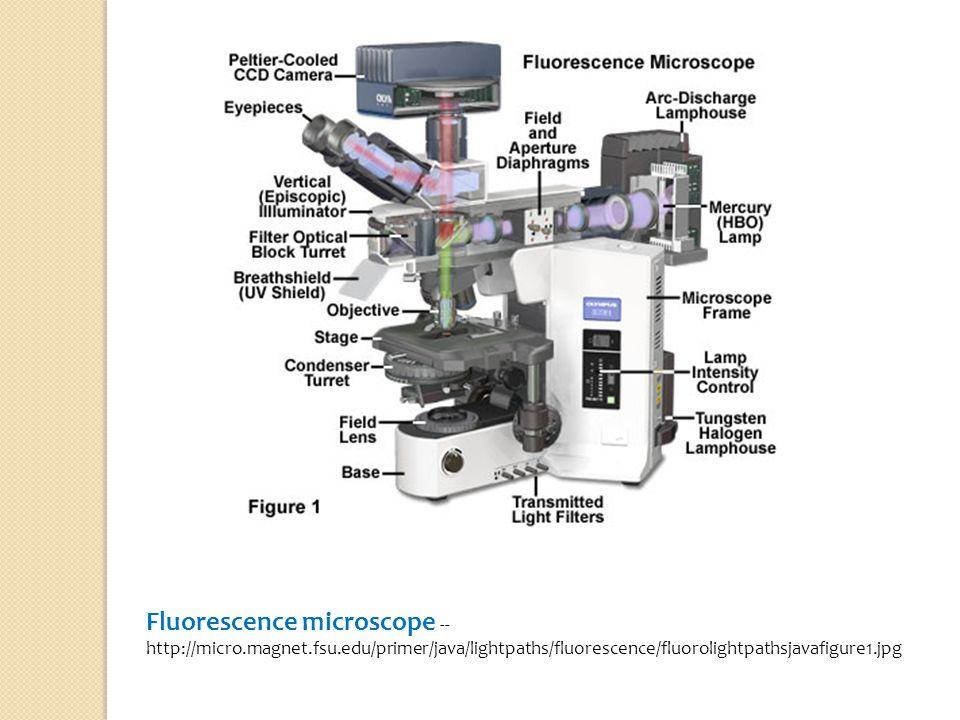 Fluorescence microscope --http://micro. magnet. fsu