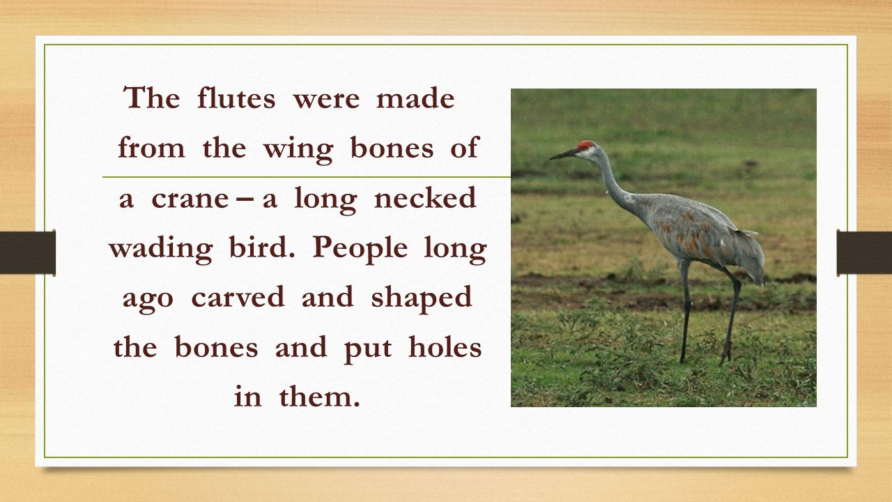The flutes were made from the wing bones of a crane – a long necked wading bird.