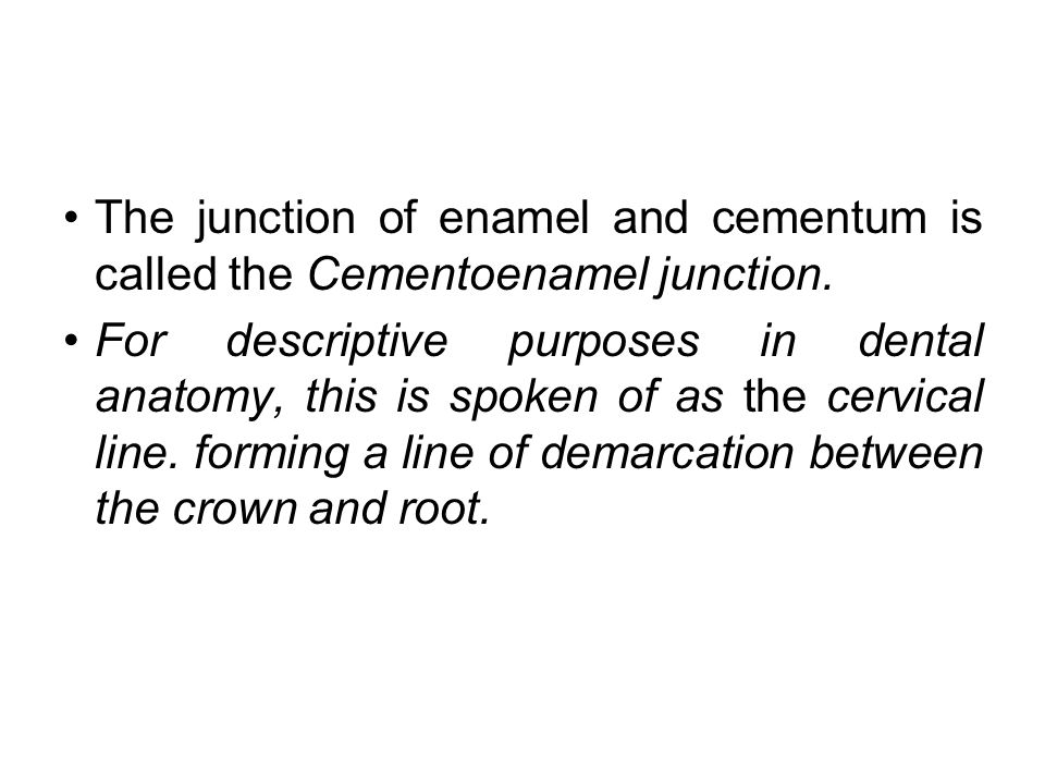 The junction of enamel and cementum is called the Cementoenamel junction.