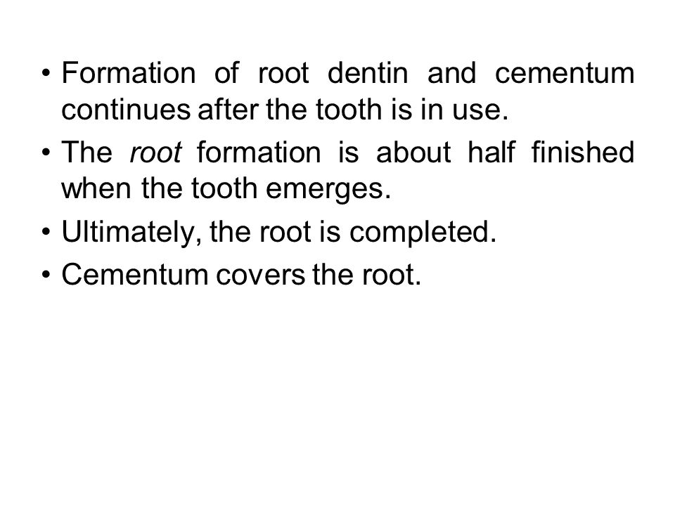 Formation of root dentin and cementum continues after the tooth is in use.