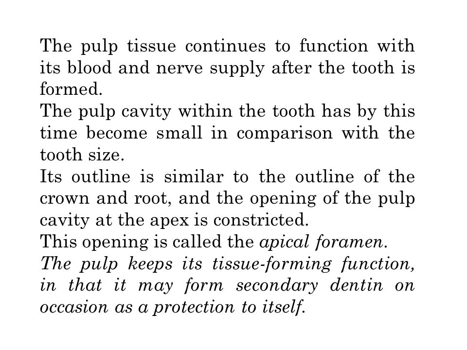 The pulp tissue continues to function with its blood and nerve supply after the tooth is formed.