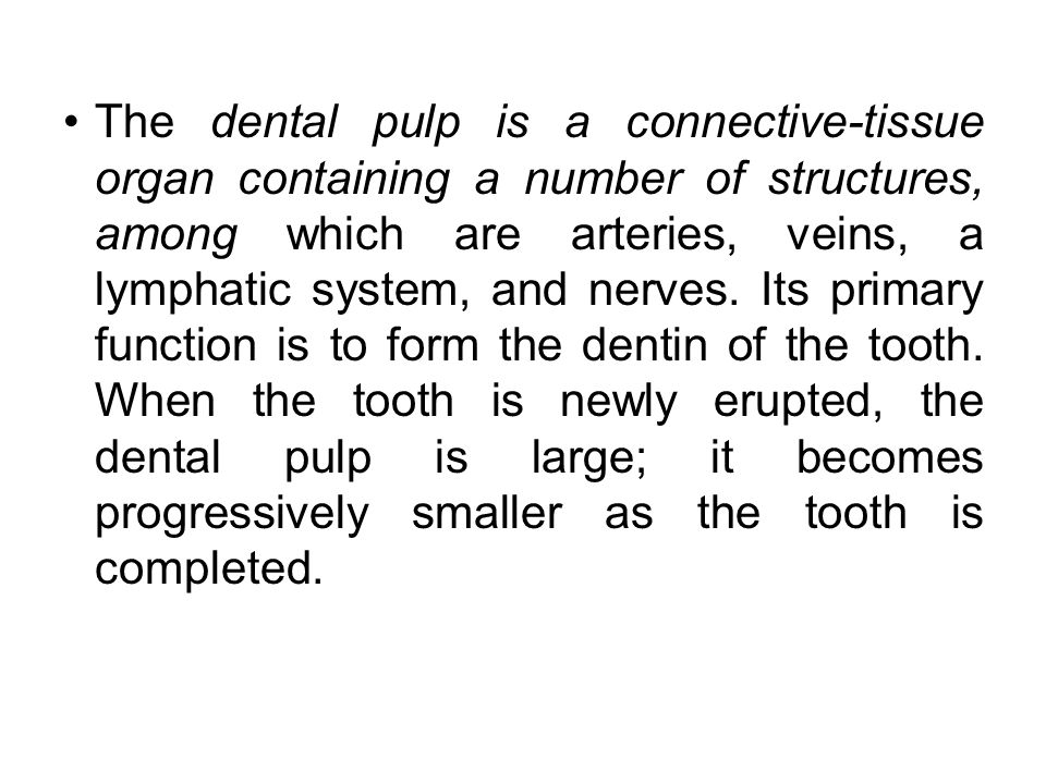 The dental pulp is a connective-tissue organ containing a number of structures, among which are arteries, veins, a lymphatic system, and nerves.