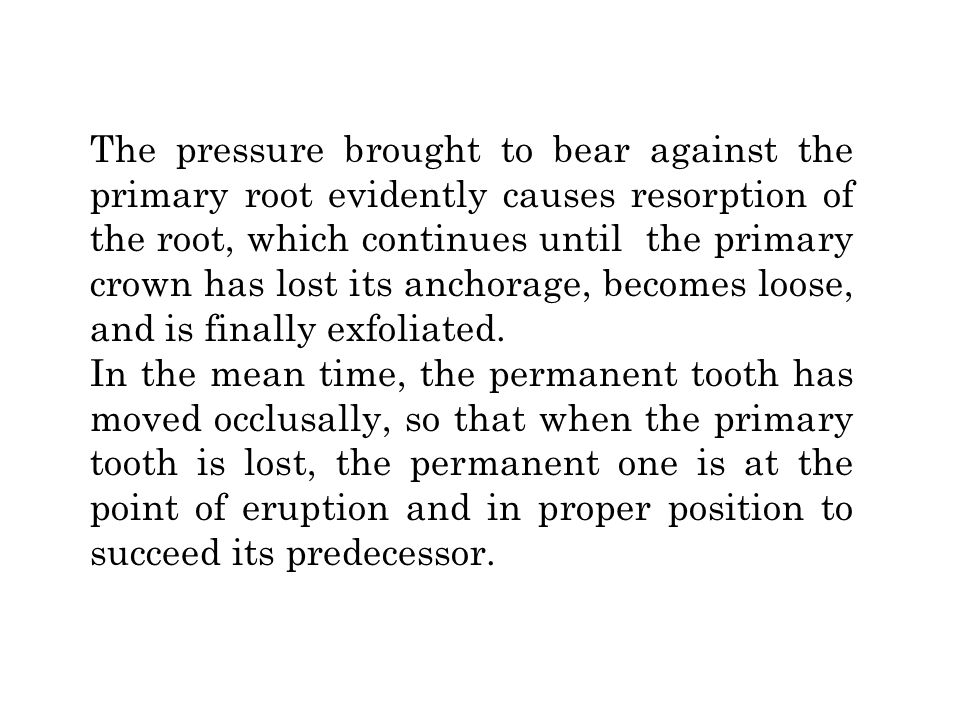 The pressure brought to bear against the primary root evidently causes resorption of the root, which continues until the primary crown has lost its anchorage, becomes loose, and is finally exfoliated.
