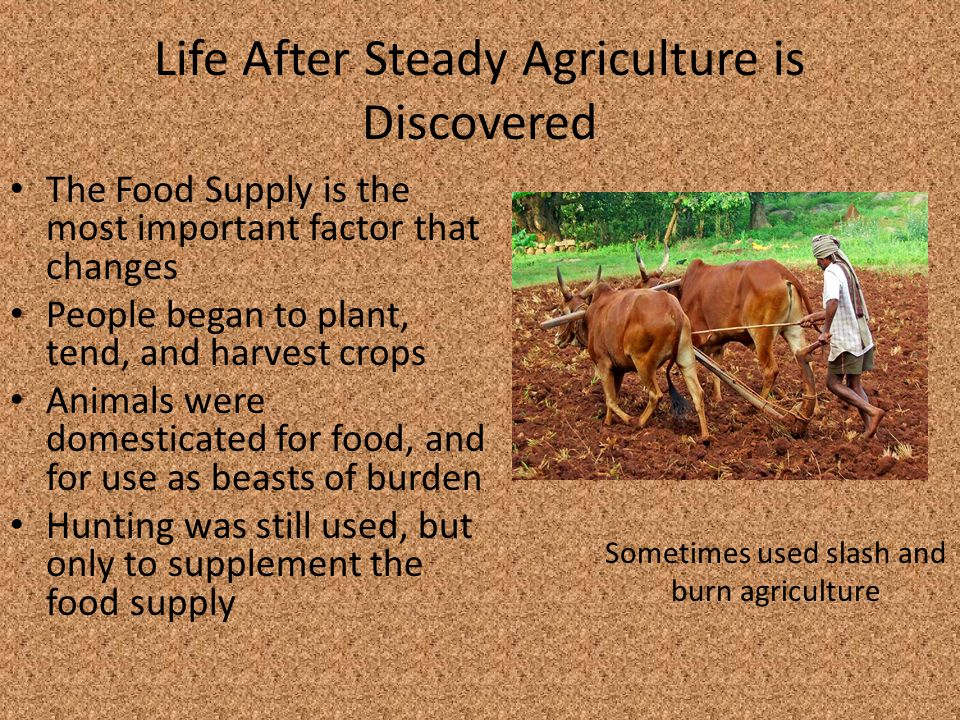 Life After Steady Agriculture is Discovered