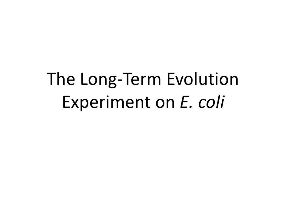 The Long-Term Evolution Experiment on E. coli