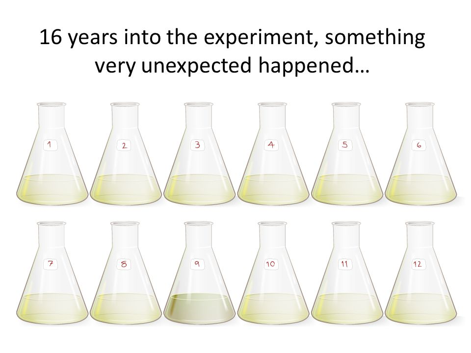 16 years into the experiment, something very unexpected happened…