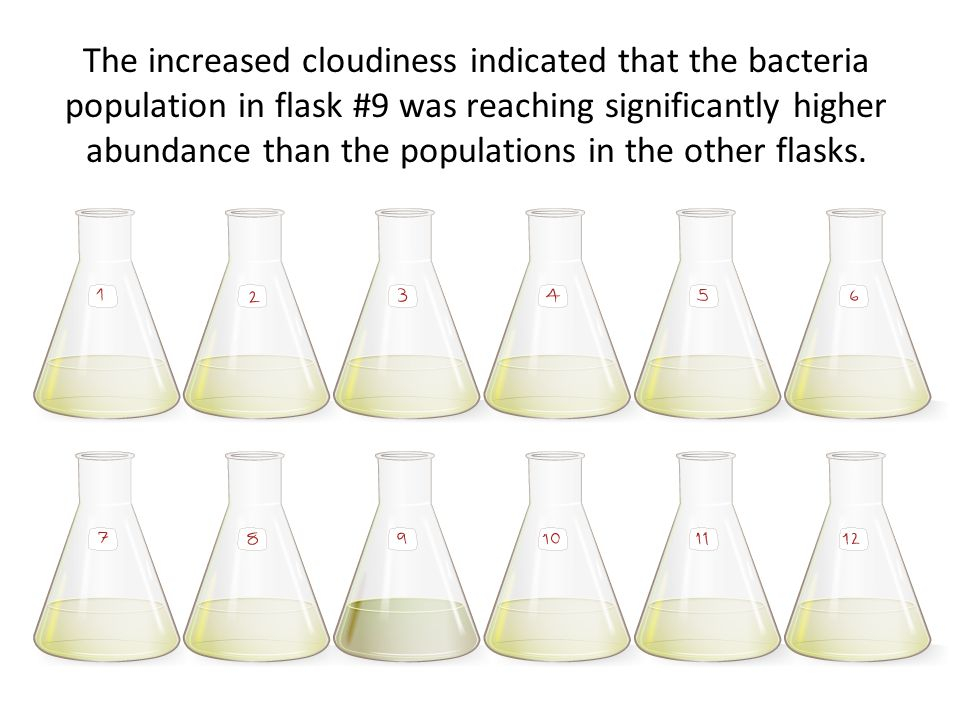 The increased cloudiness indicated that the bacteria population in flask #9 was reaching significantly higher abundance than the populations in the other flasks.