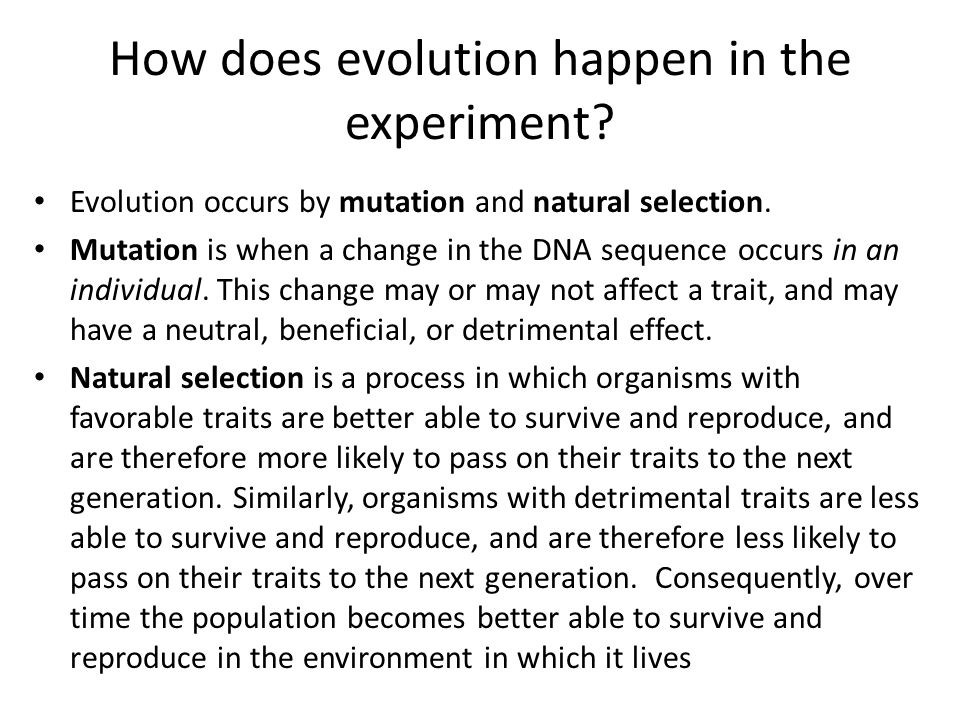 How does evolution happen in the experiment