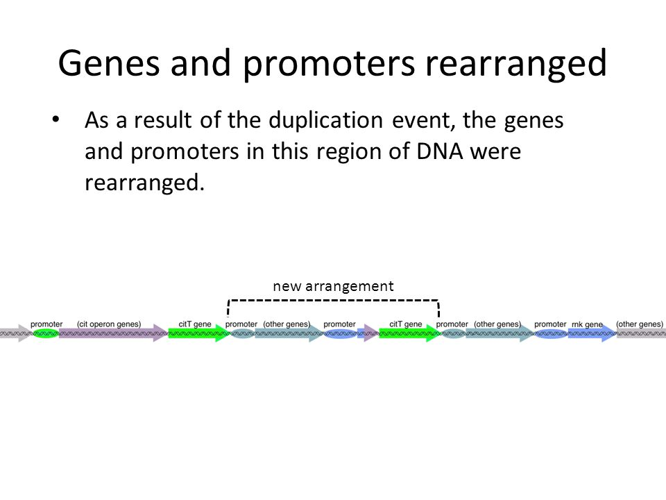 Genes and promoters rearranged