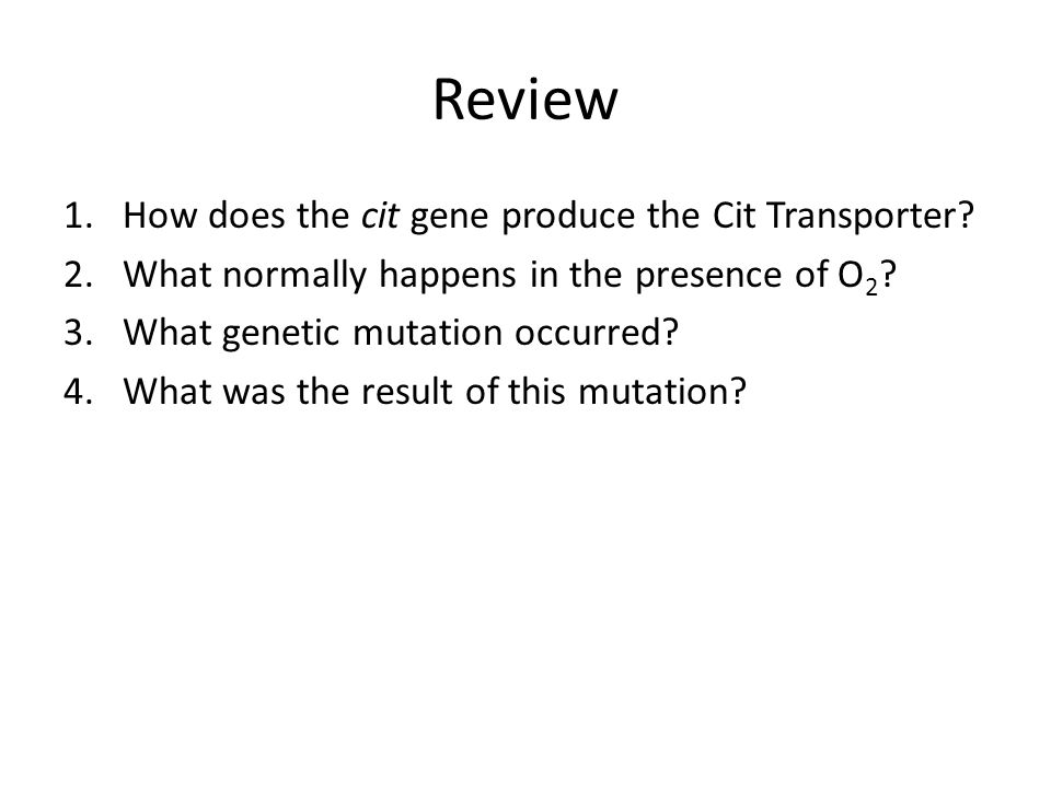 Review How does the cit gene produce the Cit Transporter