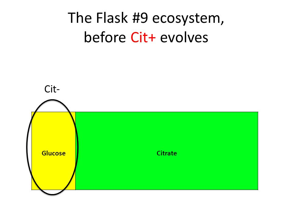 The Flask #9 ecosystem, before Cit+ evolves