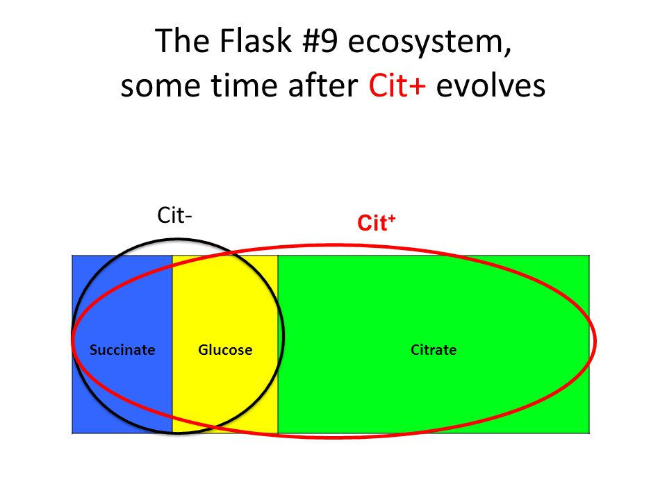 The Flask #9 ecosystem, some time after Cit+ evolves