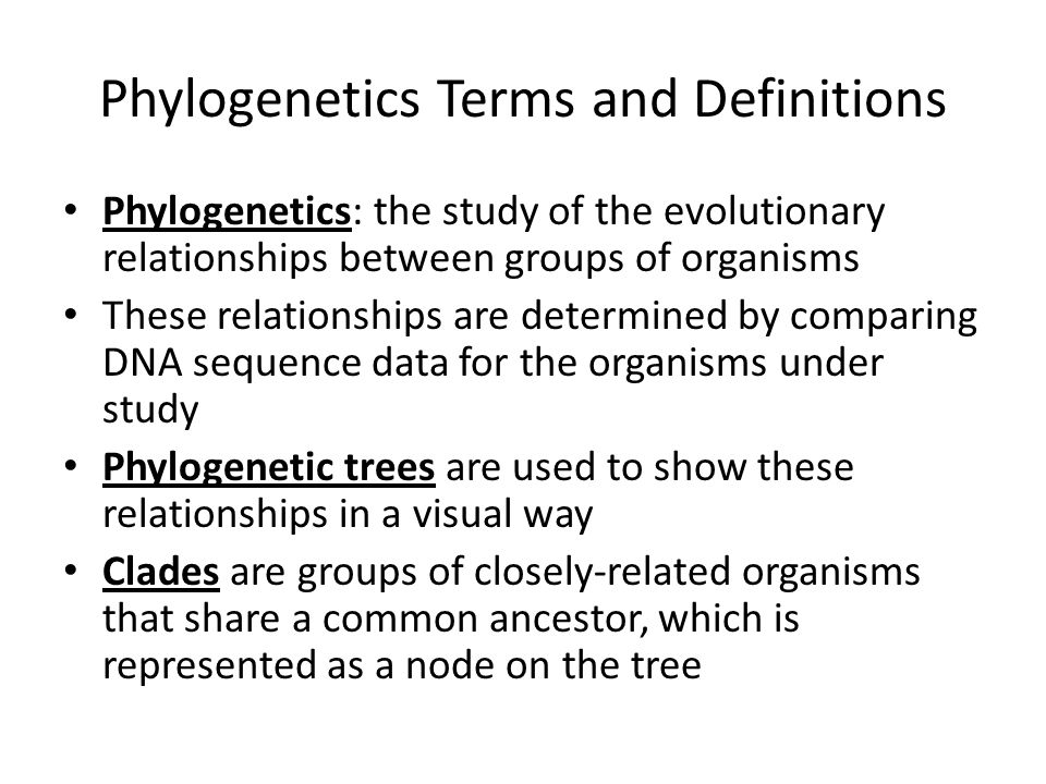 Phylogenetics Terms and Definitions