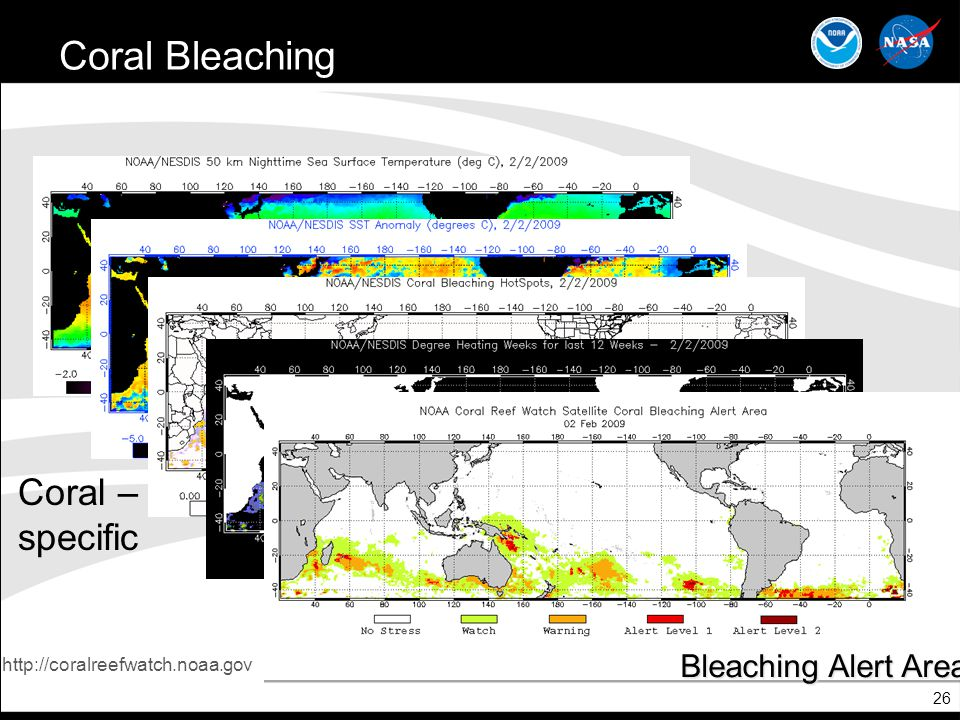 Coral Bleaching Coral – specific