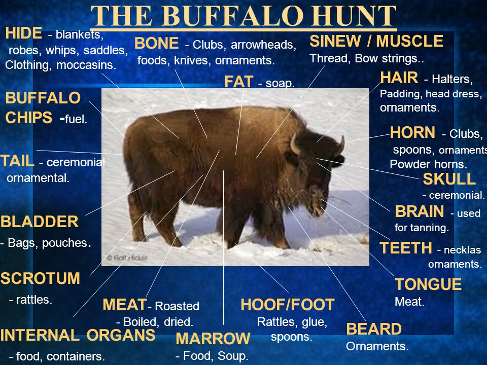 THE BUFFALO HUNT HIDE - blankets, BONE - Clubs, arrowheads,