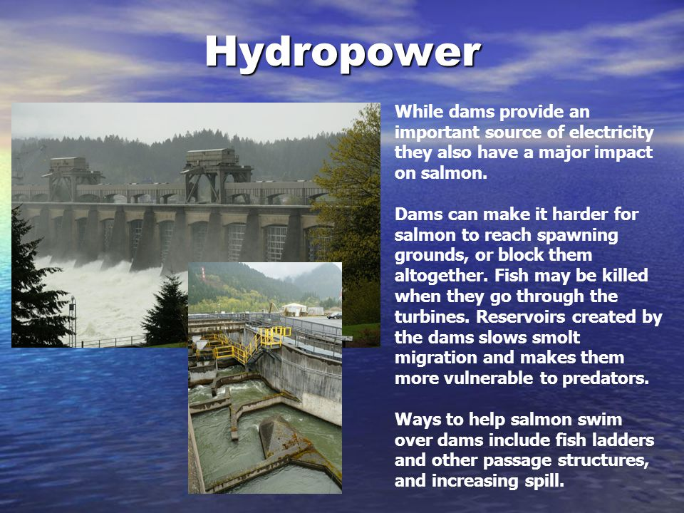 Hydropower While dams provide an important source of electricity they also have a major impact on salmon.
