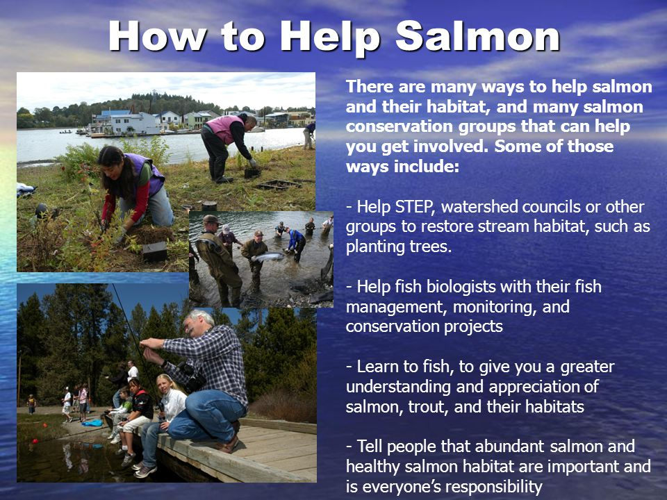 How to Help Salmon