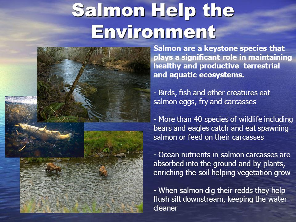 Salmon Help the Environment
