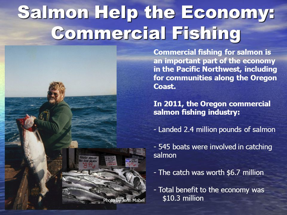 Salmon Help the Economy: Commercial Fishing