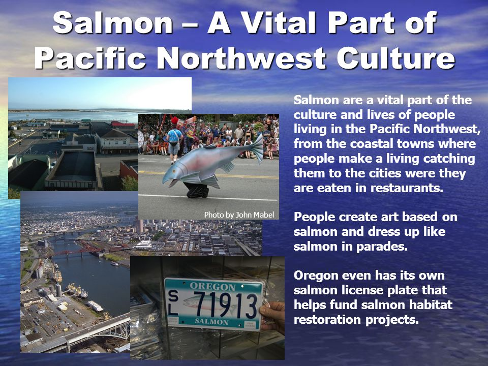 Salmon – A Vital Part of Pacific Northwest Culture