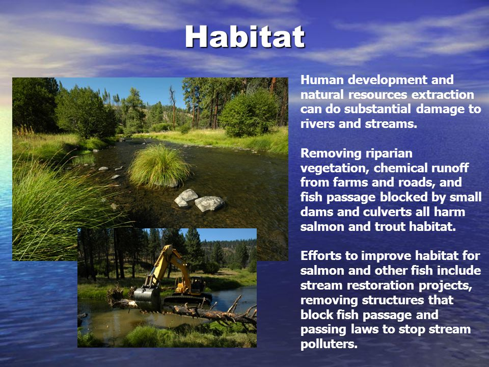 Habitat Human development and natural resources extraction can do substantial damage to rivers and streams.