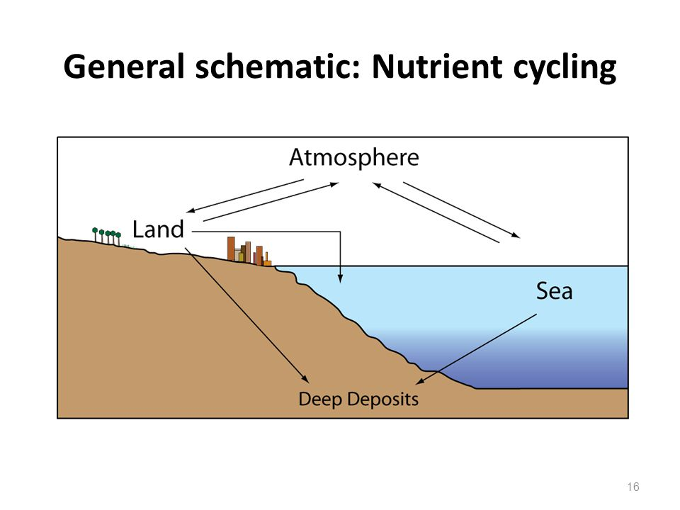 General schematic: Nutrient cycling