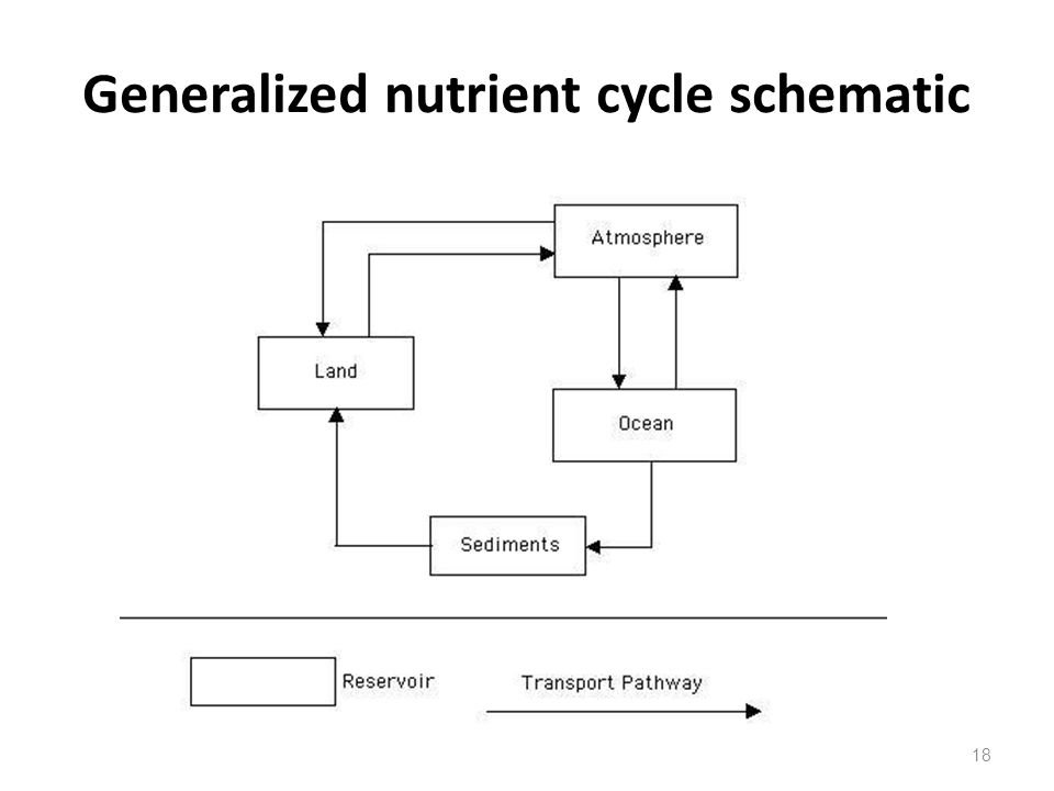 Generalized nutrient cycle schematic