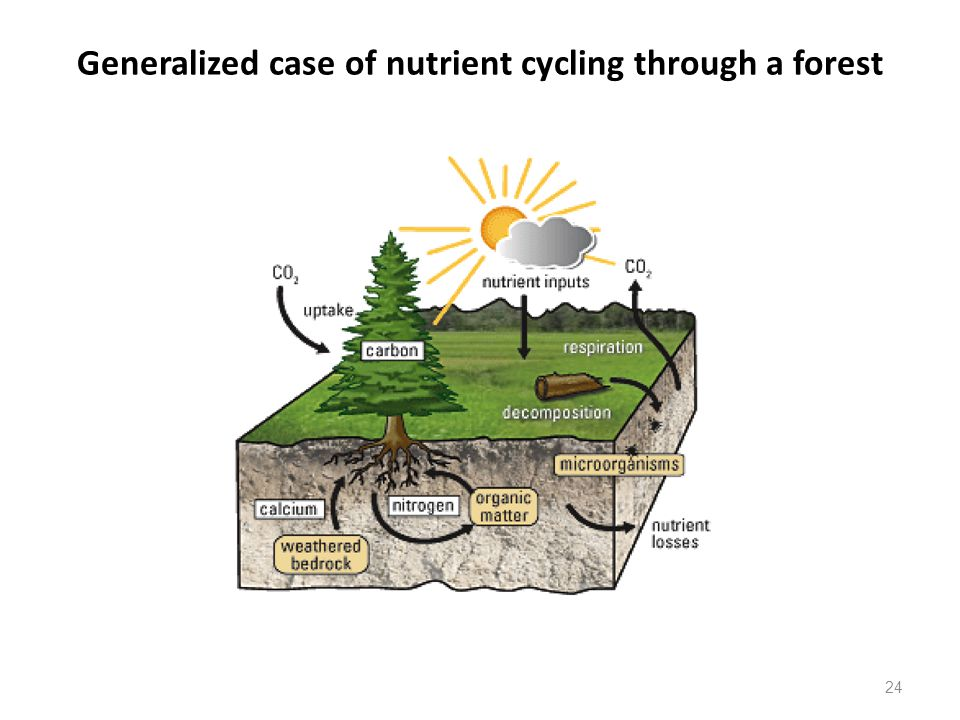 Generalized case of nutrient cycling through a forest