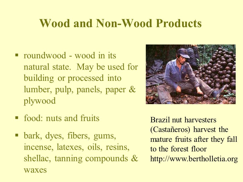Wood and Non-Wood Products